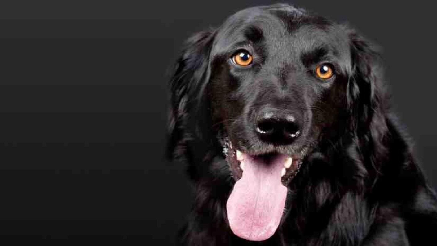 Come comida para perros durante un mes para demostrar lo «saludable» que es