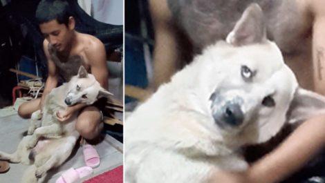 Un perro se «hace el muerto» en Tailandia para que no lo bañen