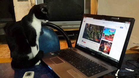 Gatito se «pone mal» y daña PC de su dueño durante streaming