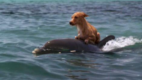 Video de perrito jugando con un delfín en el mar se hizo viral