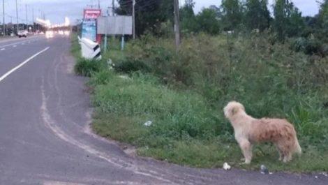 Perro tailandés esperó a sus dueños por 4 años