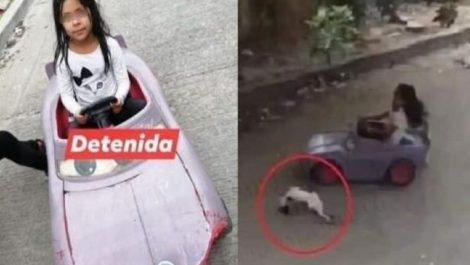 Niña en un carrito de juguete atropella a un gato y se vuelve viral