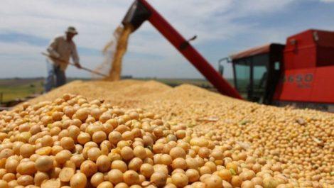Ventas de maíz y soja se multiplican por temor a retorno peronista en Argentina