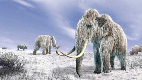 Humanos prehistóricos podrían haber creado trampas para atrapar mamuts