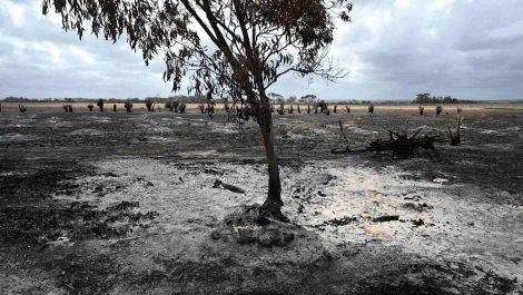 Lluvias apagan incendios en este de Australia