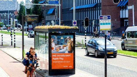 Una ciudad en Holanda toma medidas para beneficiar a las abejas y el medio ambiente