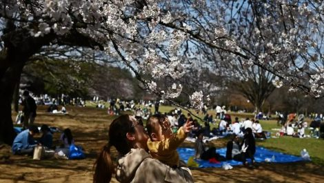 Japoneses celebran masivamente las flores del cerezo pese al virus