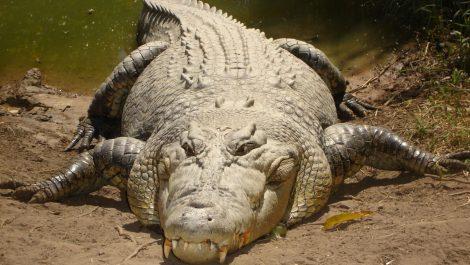 Violó el aislamiento para ir de pesca y lo devoró un cocodrilo