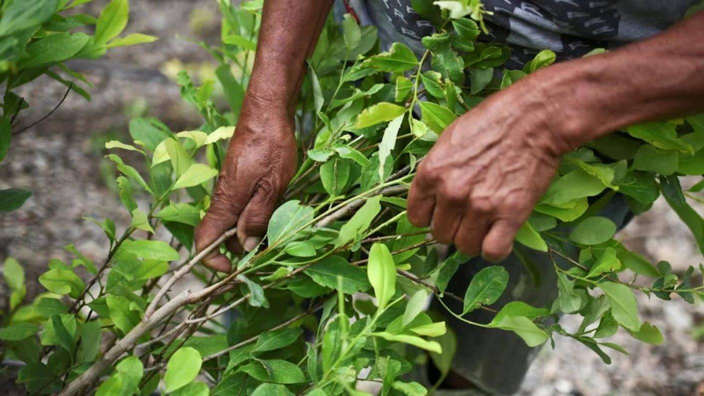Colombia asegura que erradicó cerca de 45.000 hectáreas de coca en 6 meses y medio