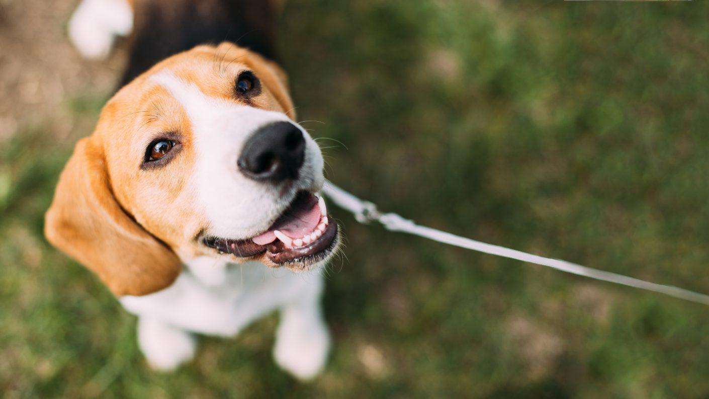 Preso un hombre en Aragua por torturar a un perro