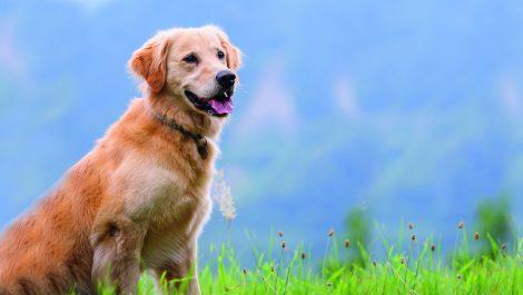 Lucky, el perrito que conmovió las redes sociales y tuvo un final feliz