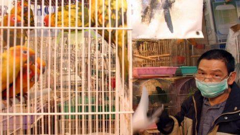 China quiere eliminar el sacrificio de aves vivas en los mercados