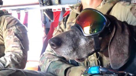 Bingo y Feco, los perros paracaidistas [VÍDEO]