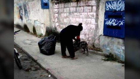 Detienen a dos personas en Los Teques por asesinar perros y vender su carne