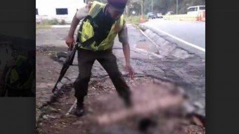 Detenidos cuatro guardias nacionales por maltratar a un gato y subir video a las redes