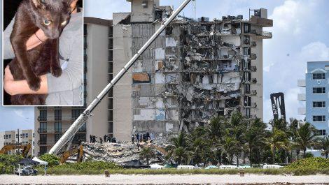 Un gato sobrevivió al colapso del edificio en Miami-Dade
